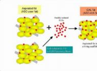 注射干细胞整容优势显著